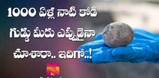 IAA have found 1000 year old chicken egg