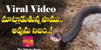 Viral Video Snake sounds karimnagar Dist