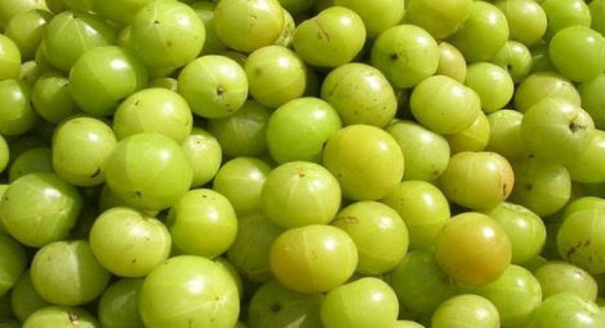 amla health benefits telugu