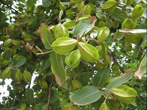 vinayaka chavithi offerd pooja with 21 varietys of leavesand medicinal plants